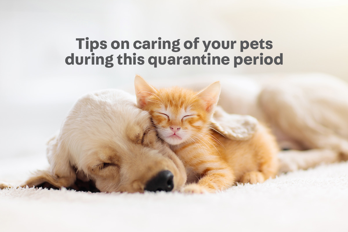 Pet care tips during the quarantine - Carousell Philippines