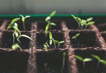 Urban Gardening 101 - How to grow your own garden and start a sustainable lifestyle - Carousell Philippines